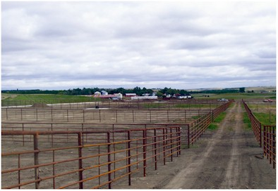 feedlot fencing