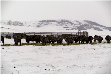 Winter feeding system with portable windbreak