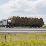 Hay being hauled by truck